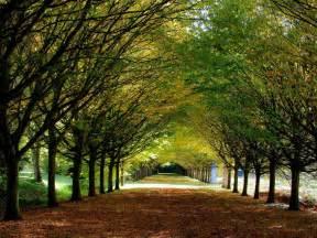 Landscape Pictures Uk Amazing Creativity Autumn Anglesey Cambridgeshire