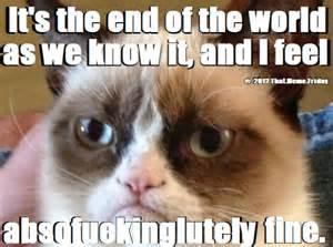 Grumpy Cat Friday Meme - lfs forum see any fireballs yet