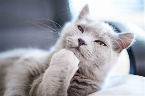 deep thoughts what is your cat thinking throughout the