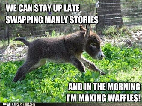 Donkey Meme - pinterest the world s catalog of ideas