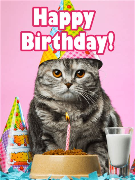 Happy Birthday Cat Card Cuddling Dog Cat Happy Birthday Card Birthday