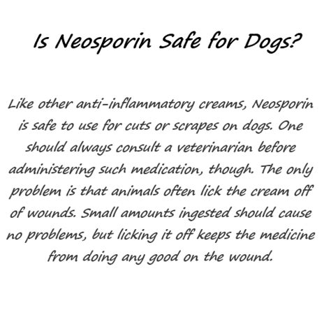 neosporin for dogs 1betterof is neosporin safe for dogs