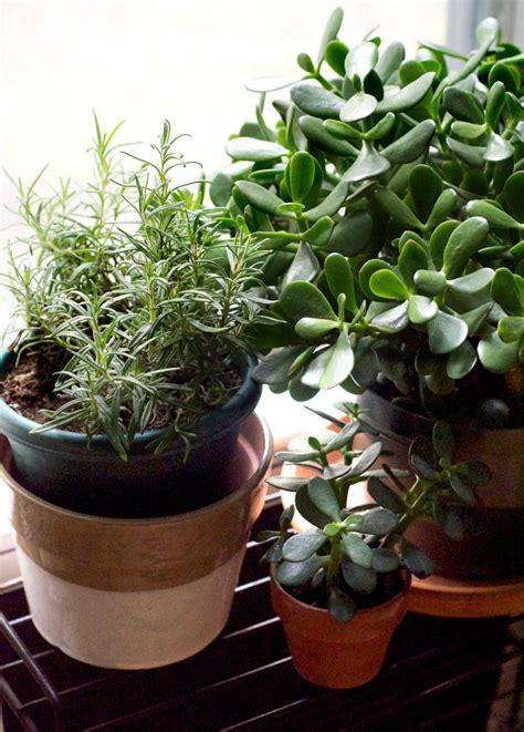succulents alive
