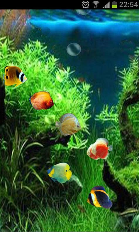 3d live fish wallpaper for pc fish tank 3d live wallpaper android apps games on
