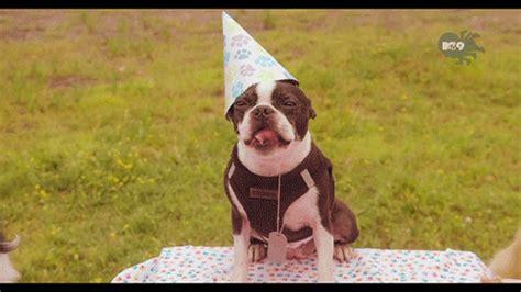 happy birthday puppy gif happy birthday gif find on giphy