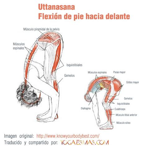 imagenes posturas yoga kundalini 17 best images about posturas de yoga on pinterest yoga