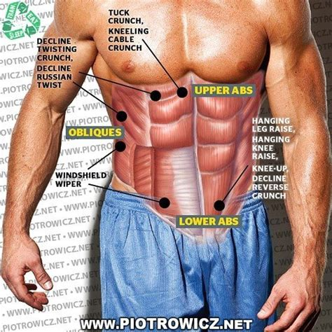 exercises workout  parts   abs learn abbs muscle fitness