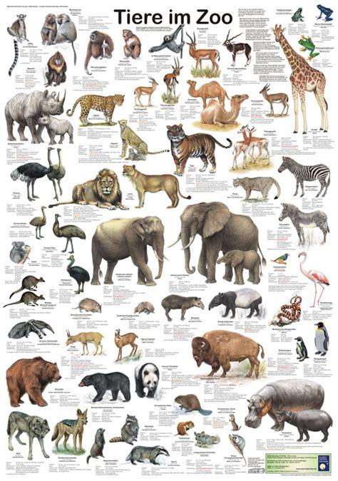 im zoo kinderbuch deutsch englisch 3191495975 tiere im zoo tierposter im kinderpostershop