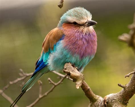 29 best images about cool looking birds on pinterest