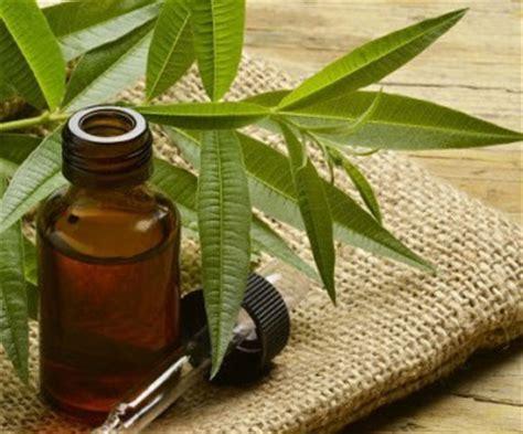 Minyak Pohon Teh cara mengatasi atau mengobati gusi bengkak dengan tepat