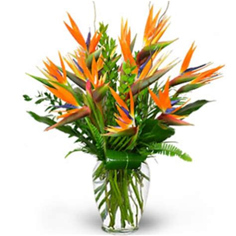 Bird Of Paradise Flower Arrangement Vase by Flowers To Mumbai Same Day Delivery Of Flowers To Mumbai