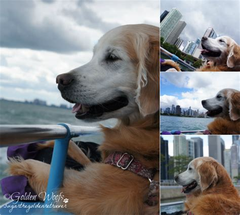 dog boat ride chicago take your dog on a boat ride chicago canine cruise