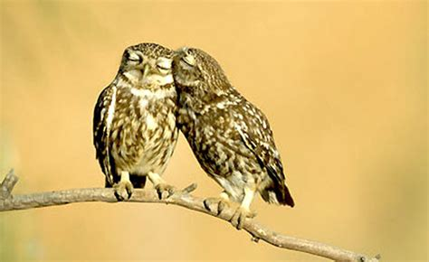 owl lovers 10 adorable in love animals cute pictures furry talk