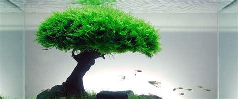 aquascape moss the top 5 best aquascaping plants aquarium info
