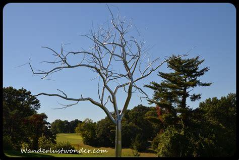 tree metal photo stainless steel tree