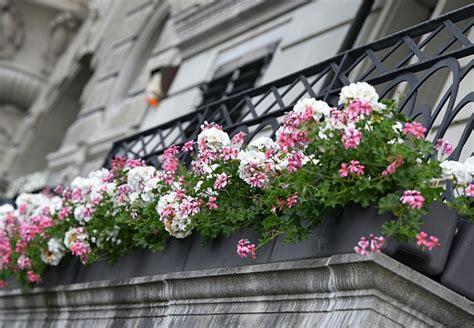piante con fiori fiori e piante per balconi e terrazzi a fiorilandia