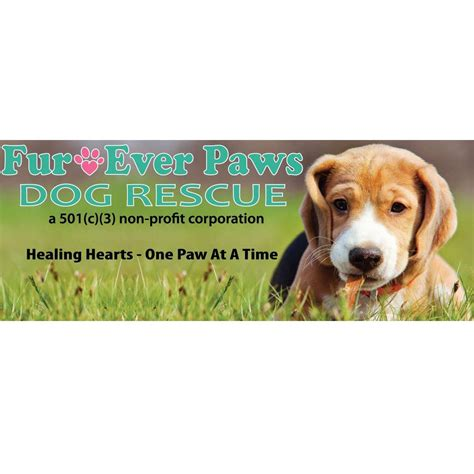 places to adopt a near me fur paws rescue coupons near me in newark 8coupons
