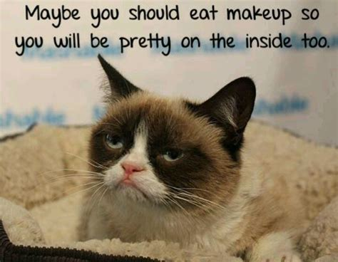Sarcastic Cat Meme - 201 best sarcastic quotes images on pinterest proverbs