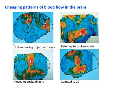 flow pattern definition blood ppt cardiac output blood flow and blood pressure