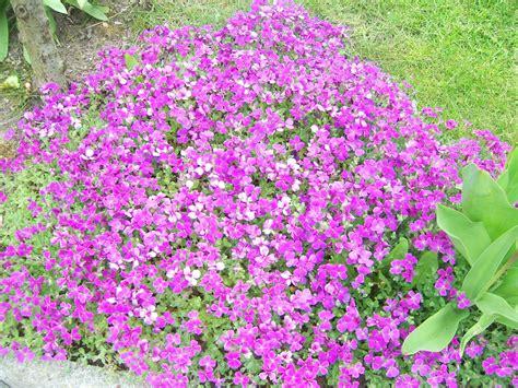 spring flower garden spring flowers gardening wallpaper 1183498 fanpop