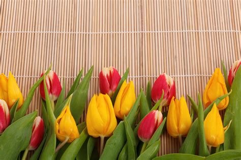 Tulip Border Images