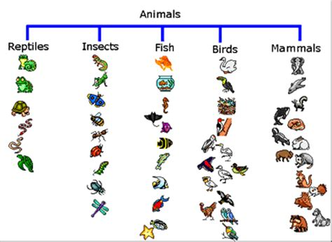 printable animal groups using thinking maps the tree map