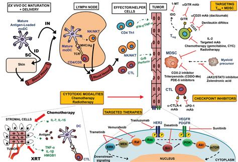 frontiers rationale for a multimodality multimodality approach to optimize dc based immunotherapy
