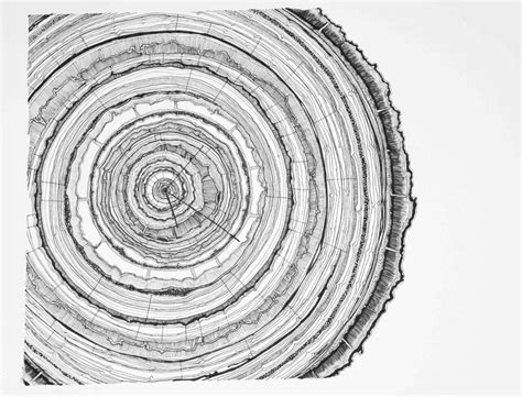 tree ring coloring page leafless tree coloring page ngorongclub tree ring coloring