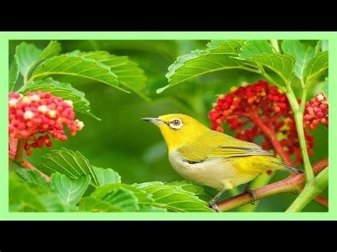 sound therapy beautiful birds song youtube