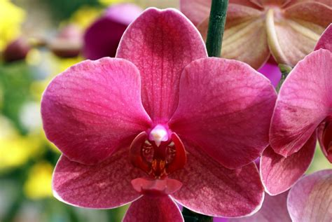 pink orchids pink orchid