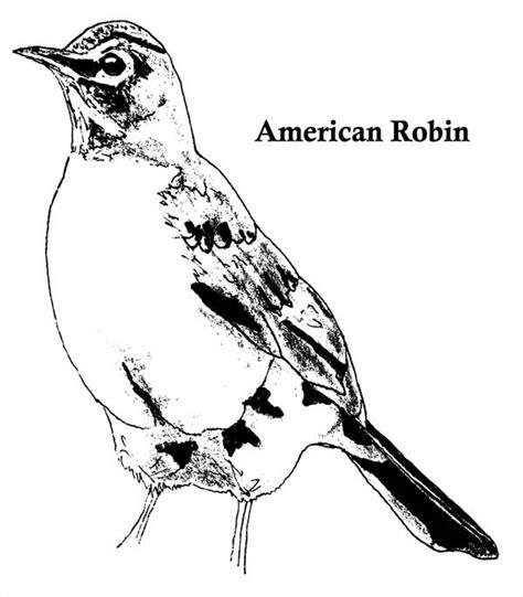 american robin coloring page american robin coloring download american robin coloring