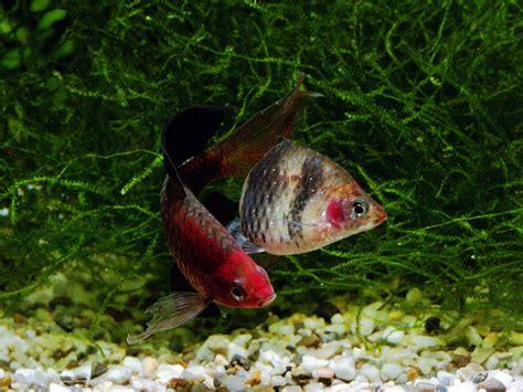 freshwater fish freshwater fish nj freshwater fishing freshwater fishing