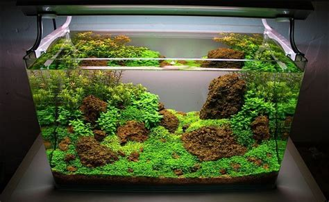 cara membuat filter aquascape aquascape