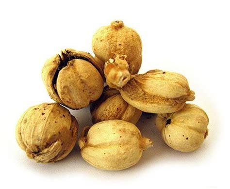 Kapulaga Hijau India cr 233 233 pour vinastio macam macam bumbu dapur