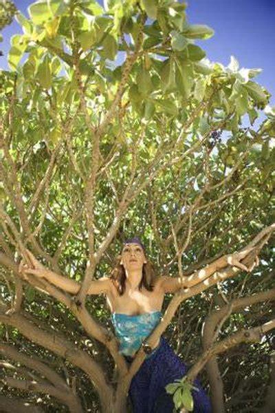 certified arborist woman