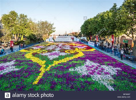 tomar fotografias de personas  identificadas de tulipanes de alfombras mas grande del mundo en