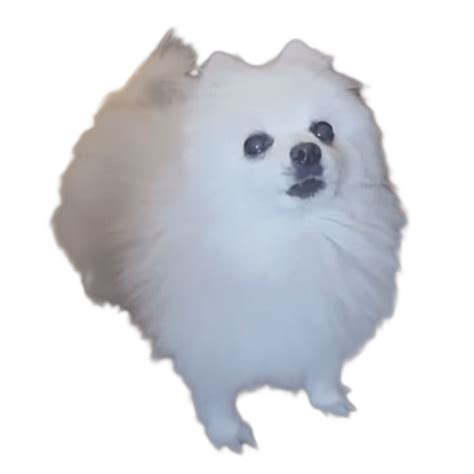 gabe the gabe the bork transparent png stickpng