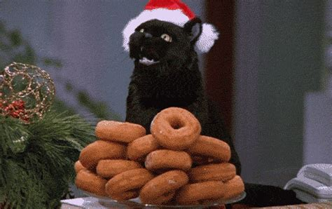 Sabina Cat Food 7 gifs describing how you may feel on national donut day