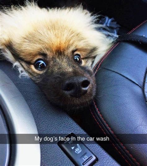 Dog In Car Meme - 25 best ideas about funny puppy memes on pinterest cute
