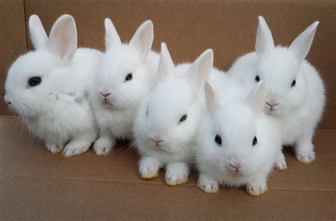 cute white cute white baby rabbit hd widescreen wallpapers 47 hd