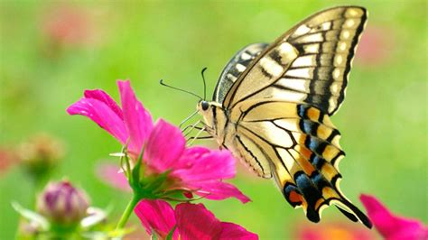 imagenes mariposas de colores galer 237 a de im 225 genes mariposas de colores