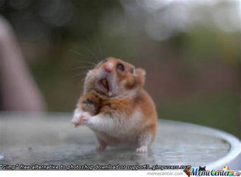 Please Meme - begging rat by bemar dayot meme center