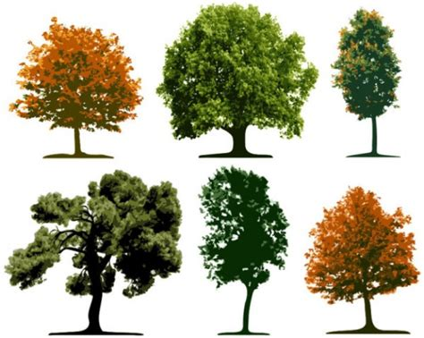 tree types tree in differents species nature pixempire