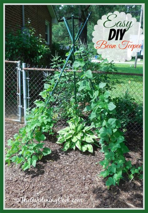 Diy Bean Teepee Is Both Functional And Decorative In A How To Create A Vegetable Garden