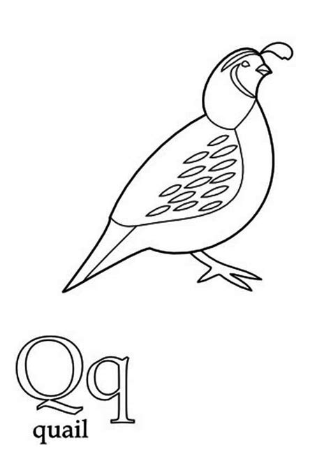 Coloring Page Quail by Free Coloring Pages Of Quail And Manna