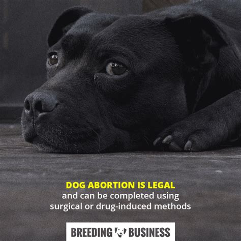 how to abort puppies guide to abortion costs methods legality of pregnancy termination