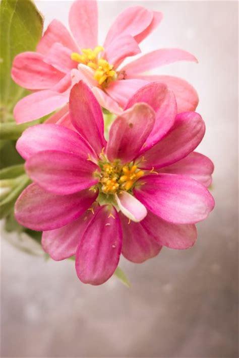 mooie bloemen afbeeldingen gratis stock foto s rgbstock gratis afbeeldingen