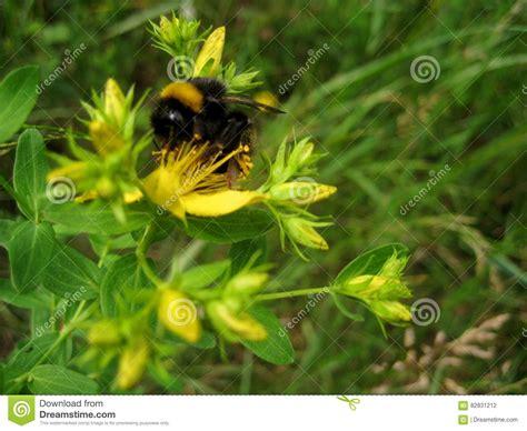 fiori medicinali fiori gialli medicinali gpsreviewspot
