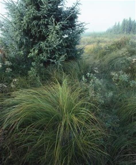 ornamental grasses that look good all year round home guides sf gate