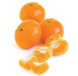 can dogs clementines morkie